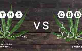THC vs CBD: What's the difference?