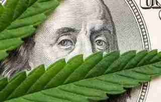 Investing in CBD signified by a hundred dollar bill covered by a hemp leaf